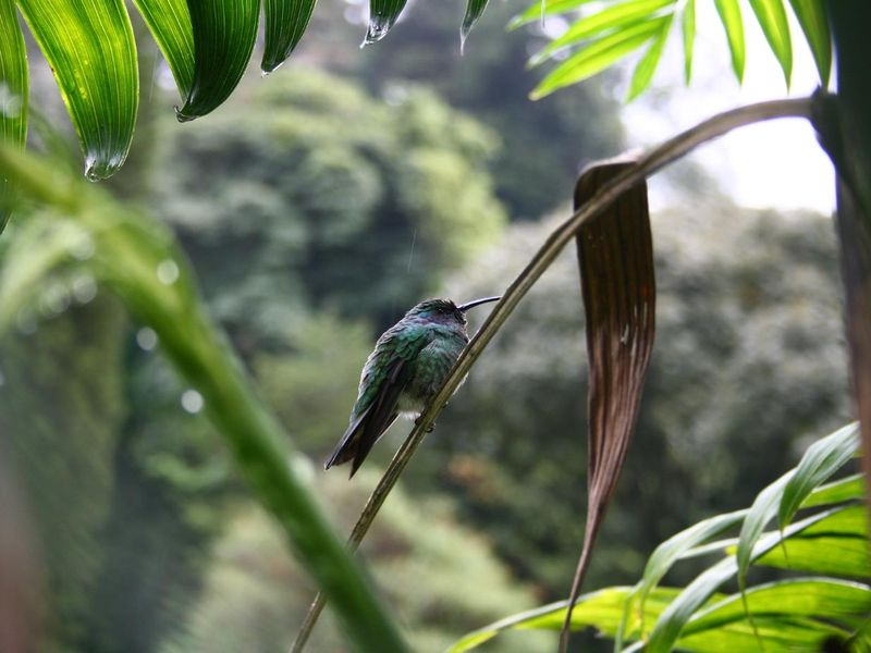 humming-bird-3621643_1920.jpg