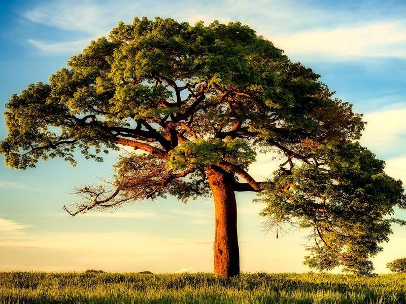 trees-2614010_1920.jpg